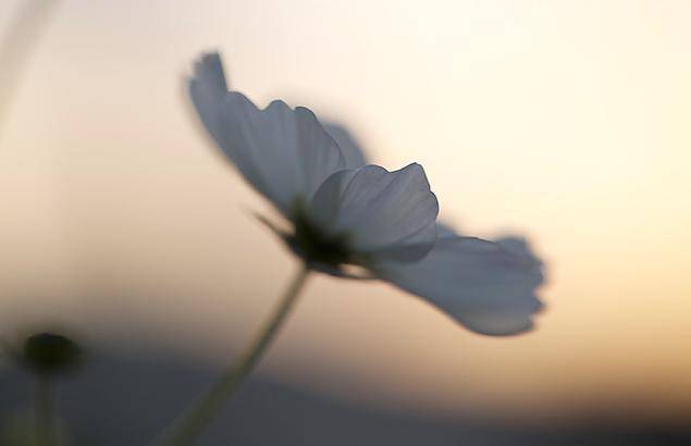 261.kosumosu_2