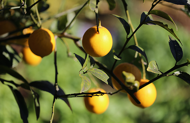313.lemon_02
