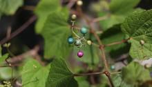 のぶどう((野葡萄)Ampelopsis glandulosa (1)