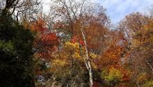紅葉(白糸の滝)_5